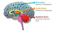 brain-regions.png