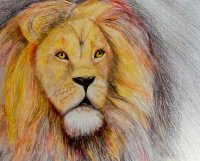 Lion Poor Quality.JPG