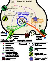 TAAR1_Dopamine.png