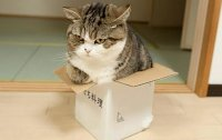 cats-in-boxes-08.jpg