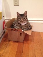 cats-in-boxes7-470x627.jpg